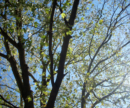 octobertrees